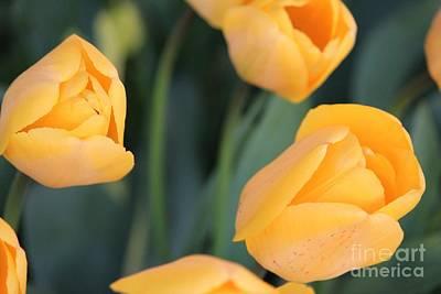 Tulips Art Print by Erica Hanel