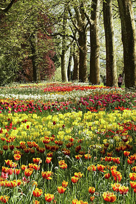Photograph - Tulips Everywhere 1 by Rudi Prott