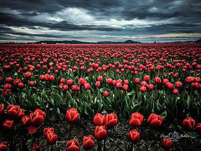Tulips Forever Art Print