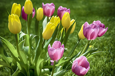 Photograph - Tulips Group by Eric Miller