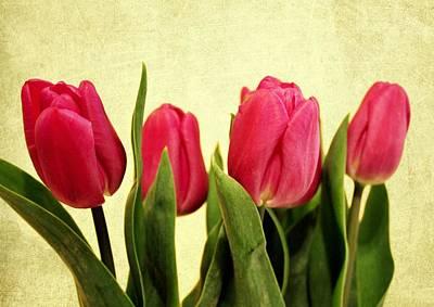 Purple Flowers Digital Art - Tulips In A Row by Cathie Tyler