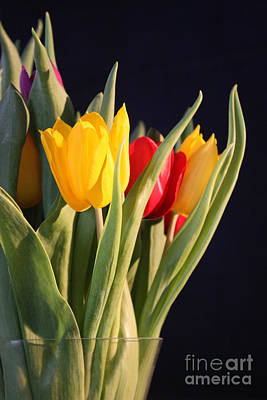 Photograph - Tulips In A Vase by Terri Waters