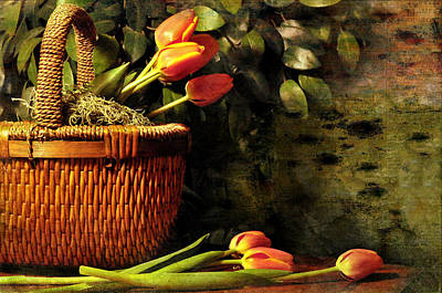 Photograph - Tulips In Basket by Diana Angstadt