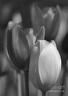 Photograph - Tulips In Black And White by Robert  Suggs