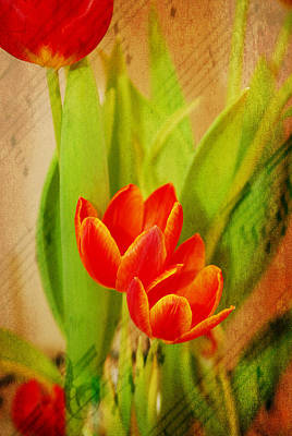 Tulips In Harmony Art Print by Mary Timman
