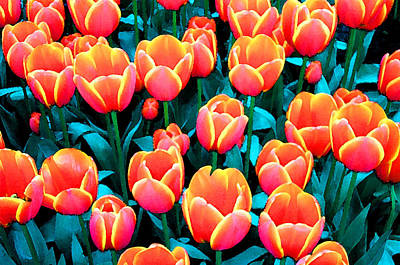 Tulips In Holland Art Print by Gene Sizemore