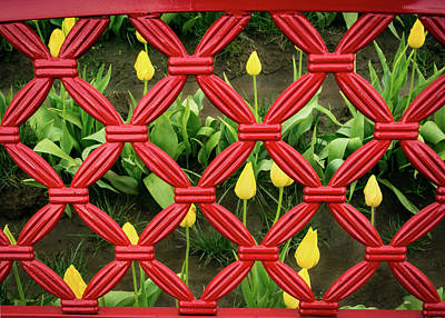 Photograph - Tulips In Jail by Jean Noren
