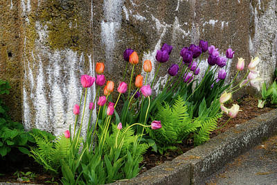 Photograph - Tulips In Ruin by Michael Hubley