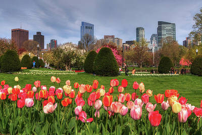 Photograph - Tulips In The Boston Public Garden In Spring by Joann Vitali