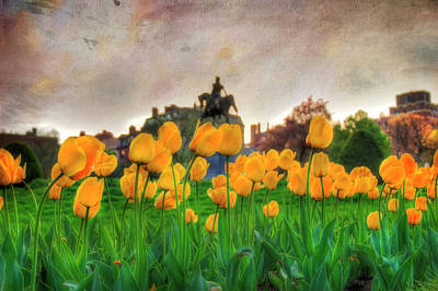 Photograph - Tulips In The Boston Public Garden by Joann Vitali