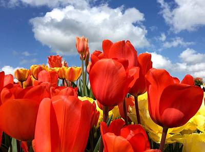 Tulips In The Sky Art Print