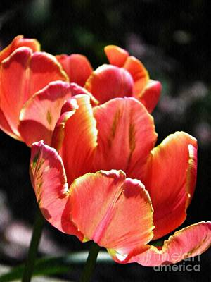 Tulips For The Home Photograph - Tulips In The Sun by Sarah Loft