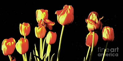 Photograph - Tulips In The Sun by Tim Richards