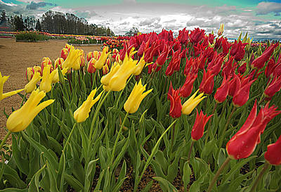 Woodburn Photograph - Tulips In The Wind by Dale Stillman