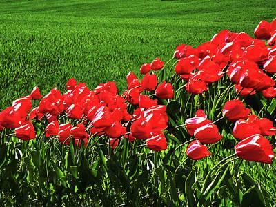 Tulips In The Wind Art Print