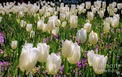 Photograph - Tulips In White by D Davila