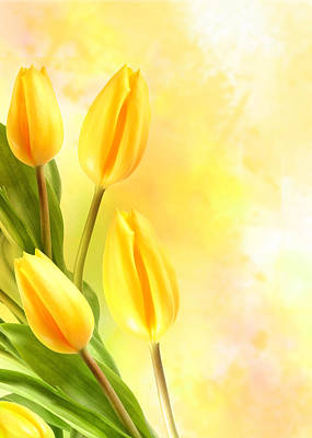 Tulips In Yellow Art Print by Mark Rogan