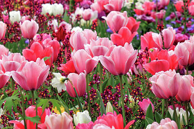 Art Print featuring the photograph Tulips by James Eddy
