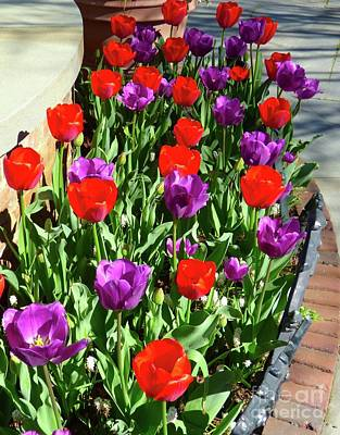Photograph - Tulips by Jean Wright