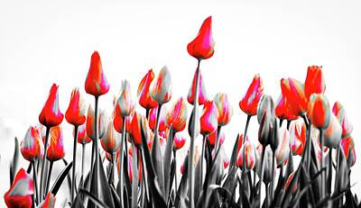 Photograph - Tulips by John Babis