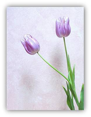 Photograph - Tulips by Karen Shackles