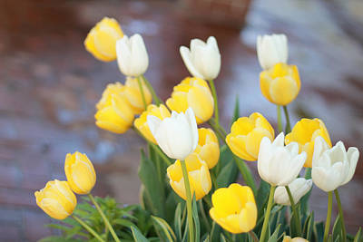 Photograph - Tulips by Lilian Forsyth