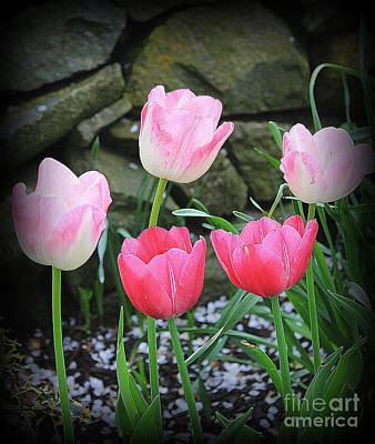 Photograph - Tulips Lovely In Shades Of Pink by Dora Sofia Caputo Photographic Art and Design