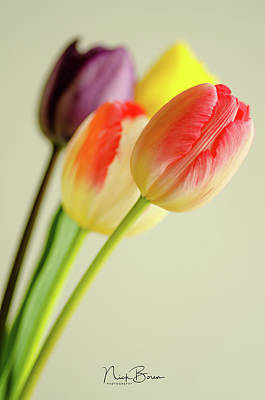 Photograph - Tulips Make Me Happy by Nick Boren