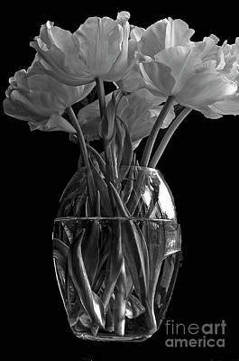 Madonna - Tulips by Marion Galt