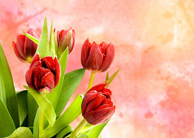 Tulips Art Print by Mark Rogan