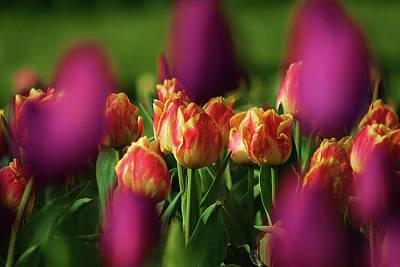 Tulips Art Print by Martina Fagan