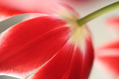 Wall Art - Photograph - Tulips by Mary McGrath