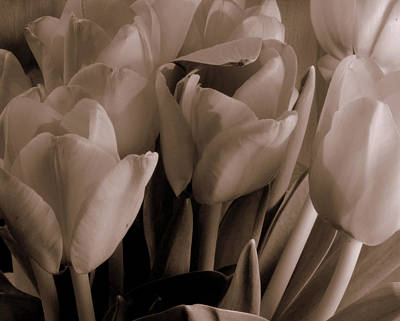 Photograph - Tulips Of Love by Karen Musick
