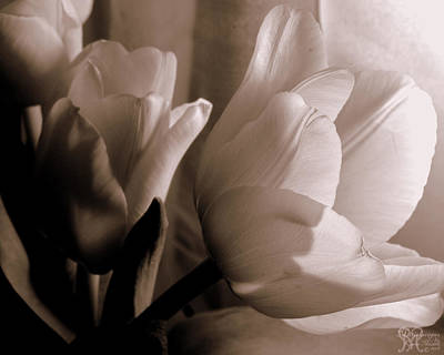 Photograph - Tulips Of Love Too by Karen Musick