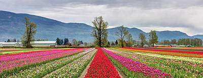 Photograph - Tulips Of The Valley by Pierre Leclerc Photography