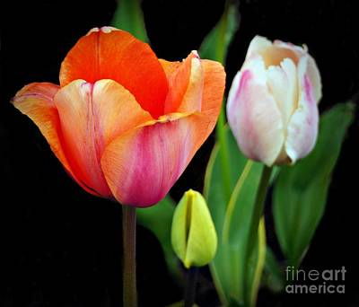 Tulips On Black Art Print
