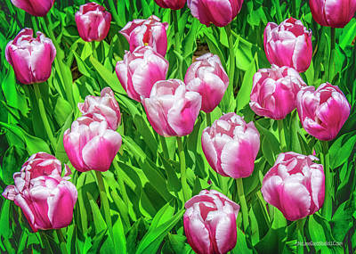 Photograph - Tulips On Green by LeeAnn McLaneGoetz McLaneGoetzStudioLLCcom