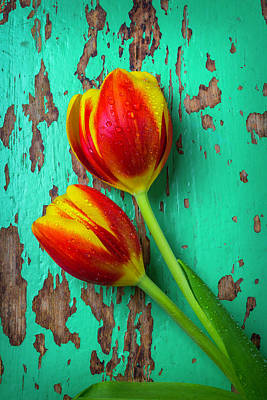 Chip Photograph - Tulips On Green Wood by Garry Gay