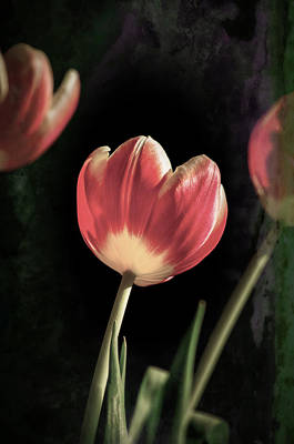 Photograph - Tulips On My Table by Spikey Mouse Photography