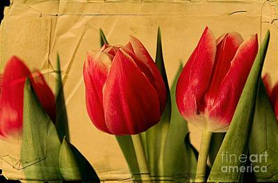 Tulips On Parchment Art Print by Clare Bevan