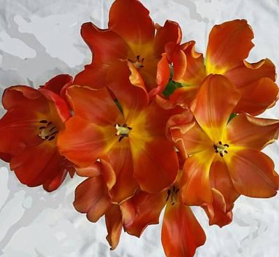 Tulips On White Art Print