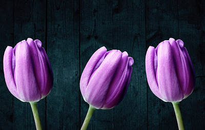 Photograph - Tulips On Wood by Johanna Hurmerinta