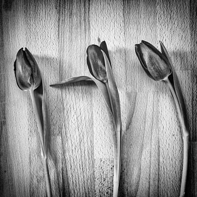 Black And White Flower Photography - Tulips on wooden board - monochrome. by Paul Cullen
