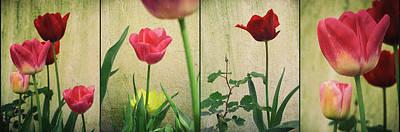 Photograph - Tulips Panel by Carlos Caetano