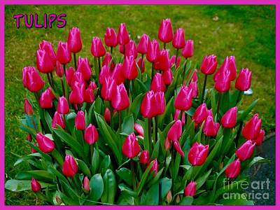 Photograph - Tulips Poster by Joan-Violet Stretch
