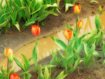 Photograph - Tulips Reflected by Bonnie Bruno