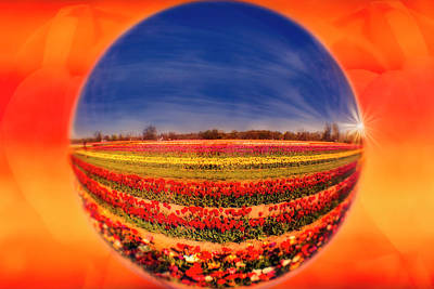 Photograph - Tulips Reflections And Refractions by Susan Candelario