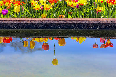 Photograph - Tulips Reflections by Nadia Sanowar