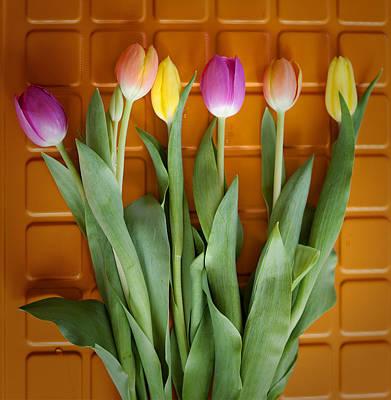 Photograph - Tulips by Sandra Ramacher