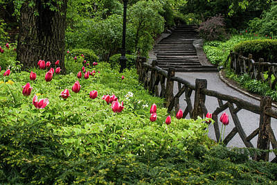 Photograph - Tulips, Stairs And Rustic Fences by Cornelis Verwaal